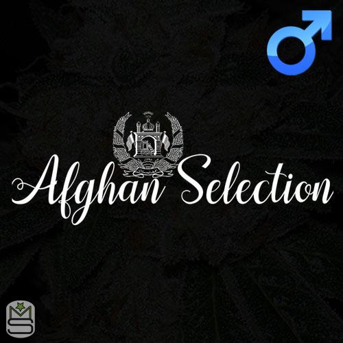Afghan Selection - Regular