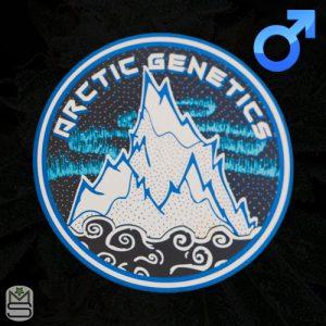 Arctic Genetics – Rainbow Mints
