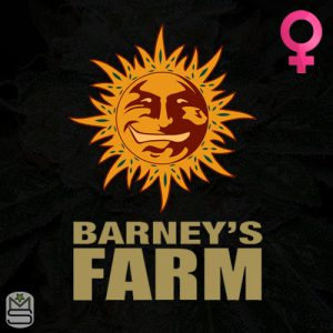 Barney's Farm – Auto Skywalker OG