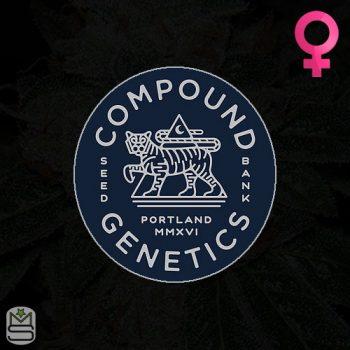 Compound Genetics – Fiji Sunset