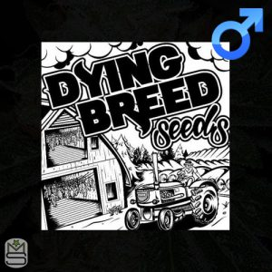 Dying Breed Seeds – Peach Ringz