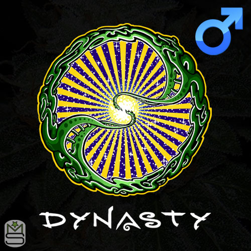 Dynasty Genetics - Regular