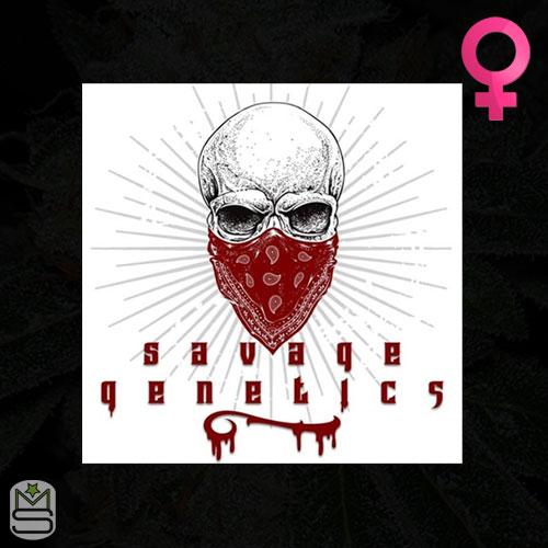 Savage Genetics - Feminized