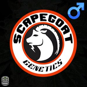 Scapegoat Genetics – We Not Me