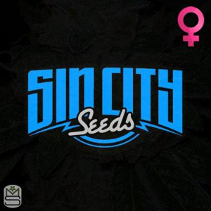 SinCity Seeds – Papaya Power