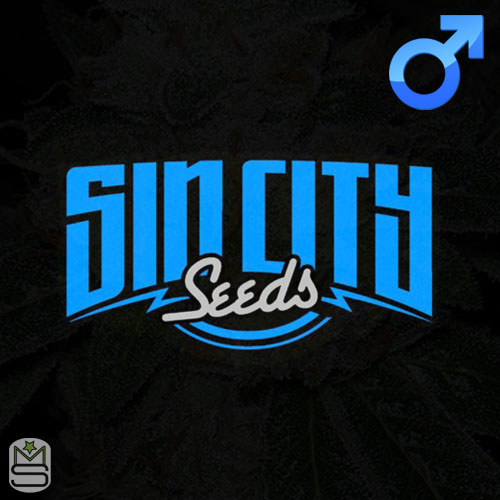 SinCity Seeds - Regular