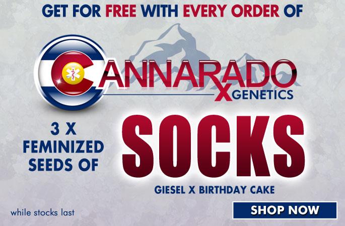 Slider - Cannarado Genetics Socks