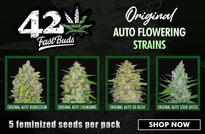 Slider - Fastbuds Original Auto Flowering Strains