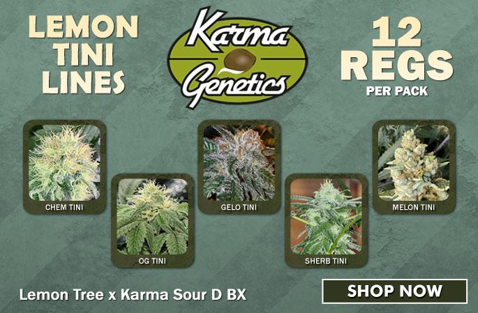 Slider - Karma Genetics - Lemon Tini Lines