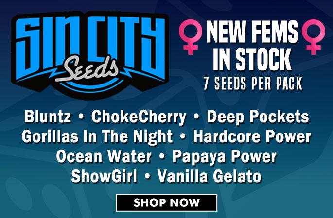 Slider - SinCity Seeds Fems