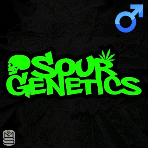 Sour Genetics - Regular