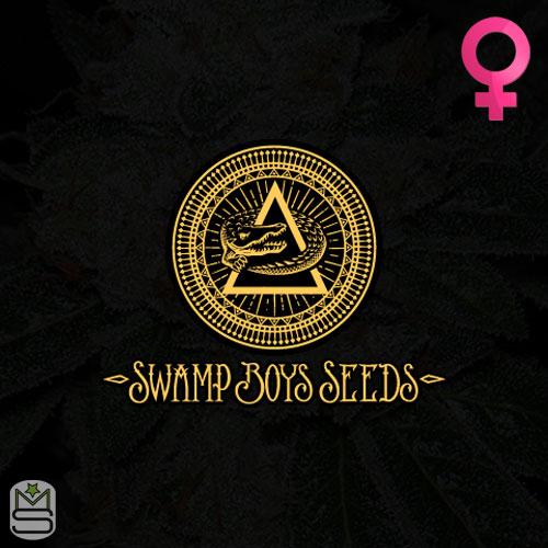 Swamp Boys Seeds Feminized