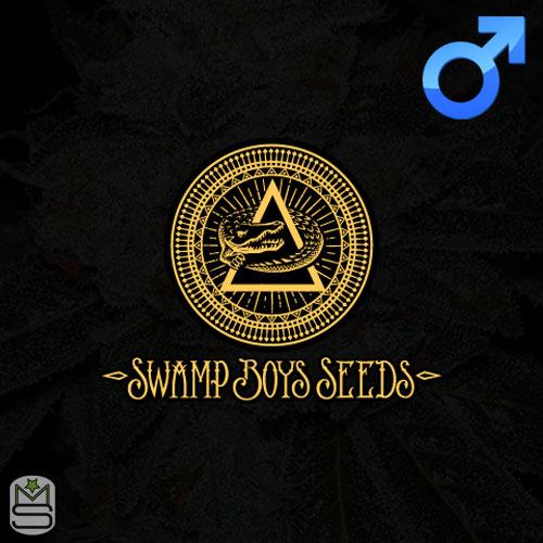Swamp Boys Seeds Regular
