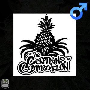 The Captains Connection – Dirty Revenge x Wizard Punch