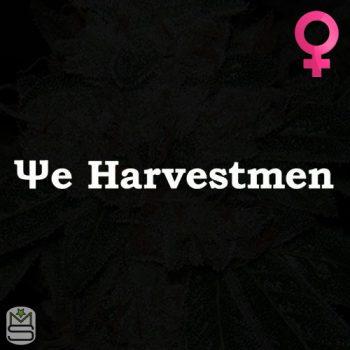 The Harvestmen – Harvest Tree