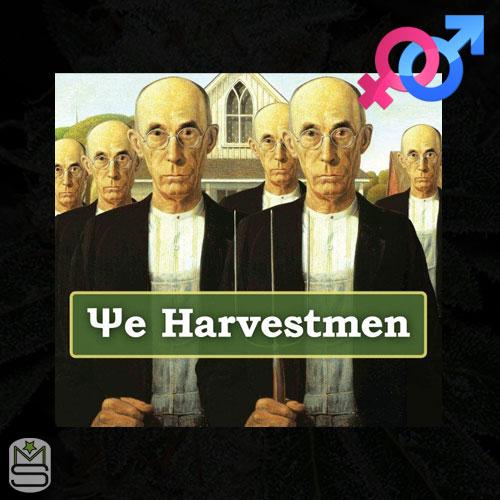 The Harvestmen - Regular & Feminized