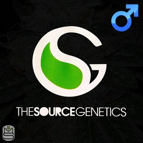 The Source Genetics Regular