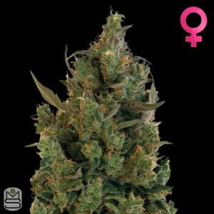 Barney's Farm – Blue Cheese