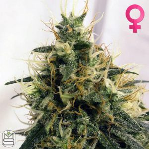 Barney's Farm – Pineapple Chunk
