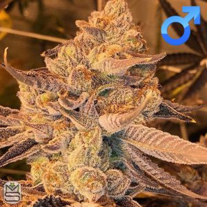 Cannarado Genetics – Margalope