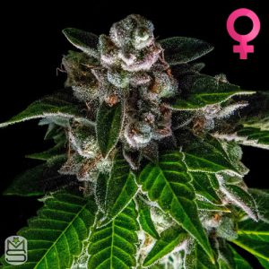 DNA Genetics – Bakers Delight