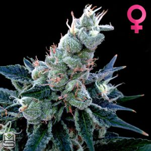 DNA Genetics – Double Alien 18