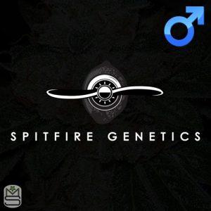 Spitfire Genetics – MAC-CubeZ