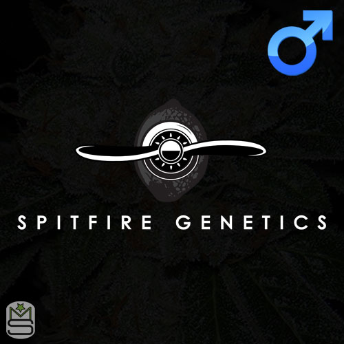 Spitfire Genetics - Regular