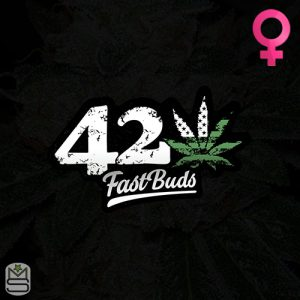FastBuds – Blackberry Auto
