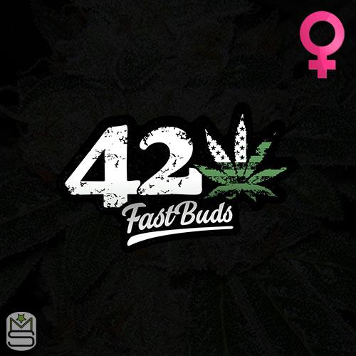 FastBuds - Feminized